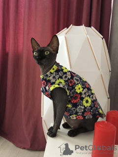 Photo №1. vêtements pour chats sphinx en ville de Москва. Prix - 13€. Annonce № 7466