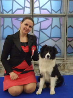 Photo №1. border collie - à vendre en ville de Kiev | 927€ | Annonce №6030